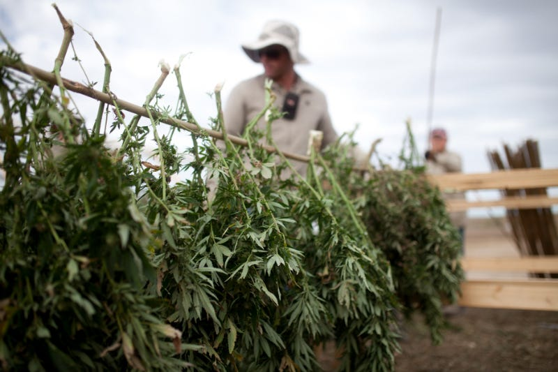 Charlotte's Web Whole-Plant Cannabinoids