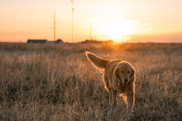 Charlotte's Web Hemp Extract for Dogs