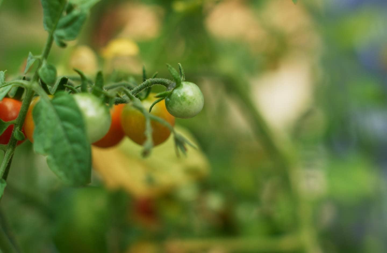 Growing a Garden of Hope.