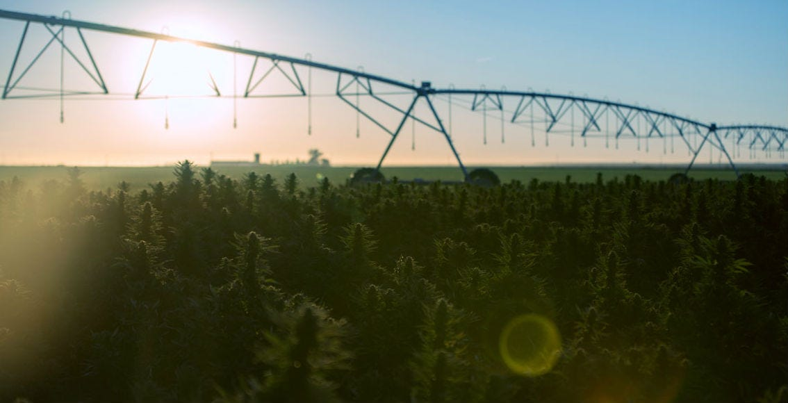 5 Things You Didn't Know About Hemp