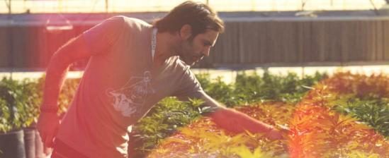 Inside The Charlotte's Web Hemp CBD Greenhouse