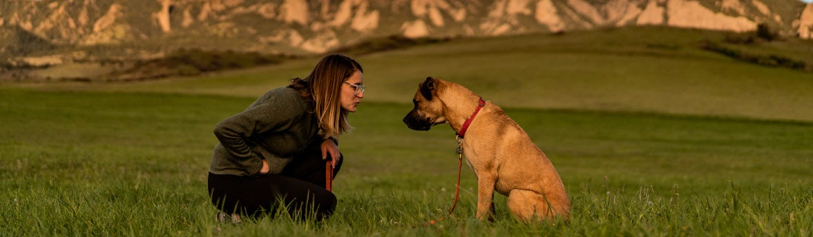 Did you know? Dogs have Endocannabinoid Systems Too!