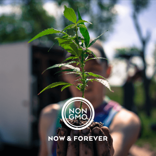 Charlotte's Web GMO Free CBD