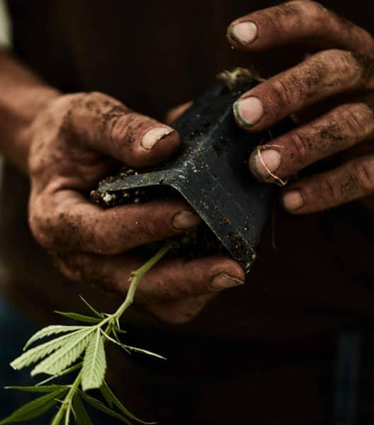 GUTS, HEART, & SOUL - plant